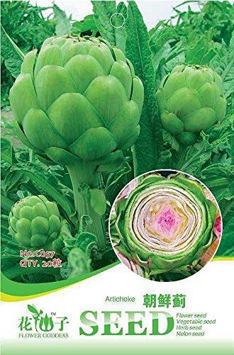 Semences de légume Graines de pépins de pomme 4 Douchette Rico en antocianinas famille Shade Paquet de Un Paquet de autour de 20