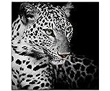 Paul Sinus Art - Quadro di qualità con immagine di un leopardo in bianco e nero su tela, Stampa su tela, Bianco e nero, 60 x 60 cm