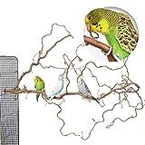 Toller Korkenzieherhasel mit vielen Sitzstangen für Wellensittiche & andere Vögel zur Käfig Montage