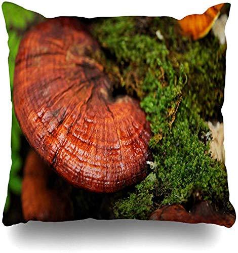 Throw Pillow Cover Red Earth Ganoderma Close Lingzhi Mushrooms Comida Bebida Moist Reishi Nature Green Lucidum Fern Dew Home Funda de Almohada Square Zipper De16x16pulgada