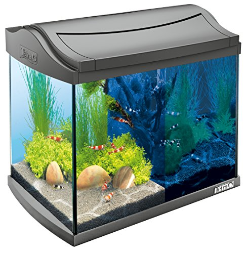 Tetra Aqua tipo Discovery Line LED Acuario Completo juego de 20L antracita (Incluye LED de iluminación, de día y noche luz Cambio de marchas, Interior filtro y acuarios Bomba, ideal para Gambas)