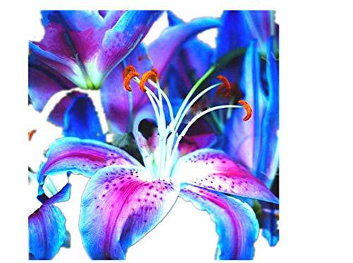 KINGDUO Egrow 100Pcs/Pack Blue Graines De Fleur De Lys Agréable Jardin De Parfum Fleurs De Bonsai Bonsai Plantation-Rouge