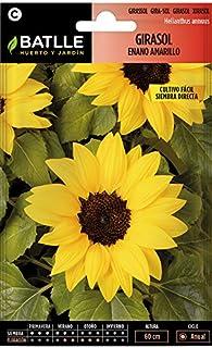 comprar comparacion Semillas de Flores - Girasol enano amarillo - Batlle