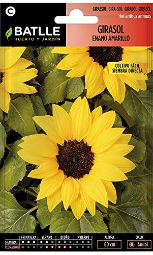 Semillas de Flores - Girasol enano amarillo - Batlle