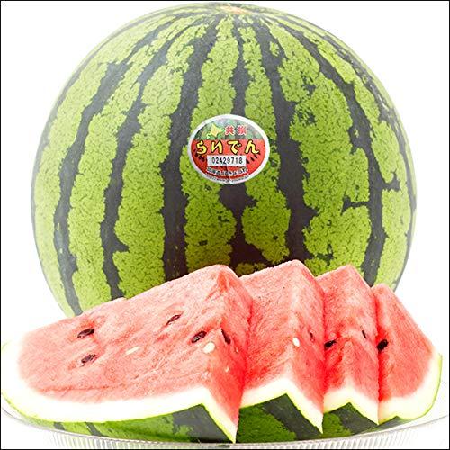 お中元 北海道産 スイカ JAきょうわ 共撰 らいでんスイカ 1玉入り(秀品/Mサイズ/1玉 3.5kg) ギフト 残暑見舞い 果物 お取り寄せ