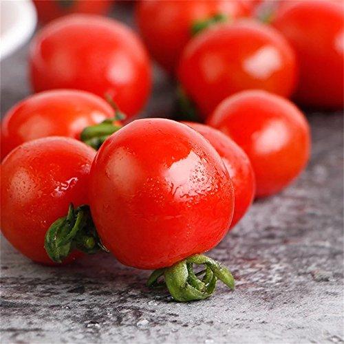 Qulista 10/20/50 Graines Tomato Cerise Tomatoberry Semences Bonsaï Fruits Plantes Biologiques Bricolage Jardinage Cadeau (10 Graines)