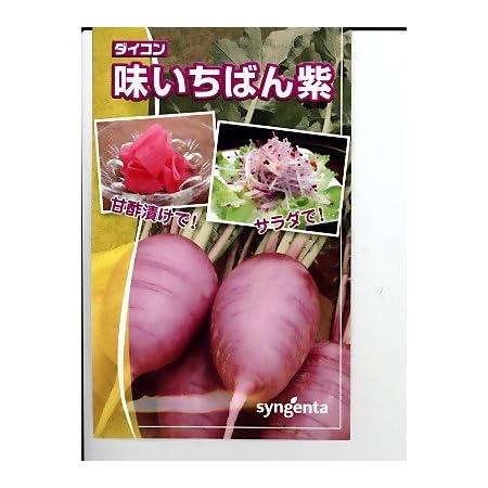 味いちばん紫ダイコン シンジェンタシードのダイコン種です