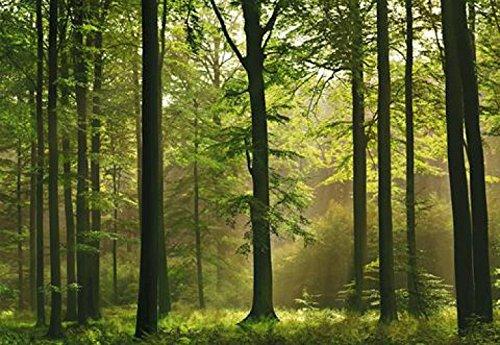 1art1 40585 Wälder - Herbst-Wald 8-teilig, Fototapete Poster-Tapete (368 x 254 cm)