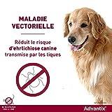 IMG-2 advantix spot on per cani
