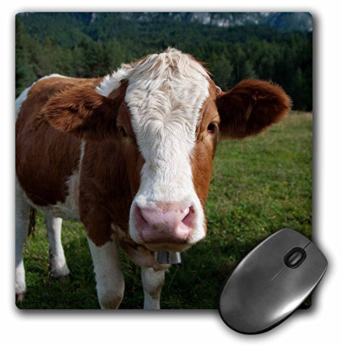 3dRose LLC 8 x 8 x 0.25 Inches Mouse Pad, Simmental Cow (mp_165721_1)