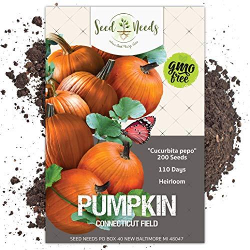 Seed Needs, Connecticut Field Pumpkin (Cucurbita Pepo) Bulk Pack of 200 Seeds Non-GMO