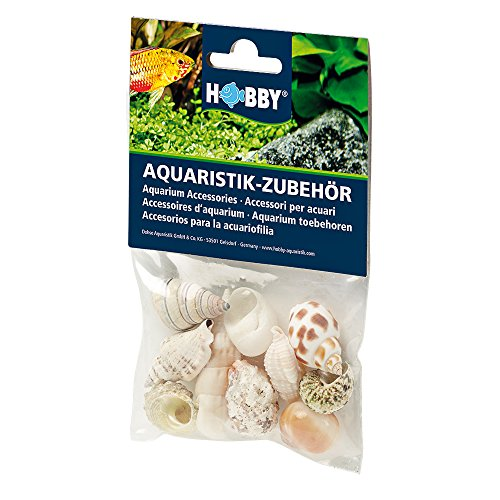 Hobby 40222 Sea Shells Set, M