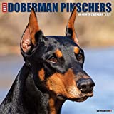 Just Dobermans 2021 Wall Calendar (Dog Breed Calendar)
