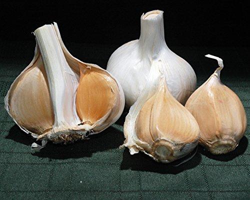 Elephant Garlic ~ Huge!! ~ Easy to Grow...