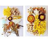 GANMFOYC 10 set di fiori secchi fai da te, vero fiore di girasole essiccato naturale candela gioielli in resina ciondolo per unghie artigianato che fa decorazioni floreali d'arte (Herbstfarben)