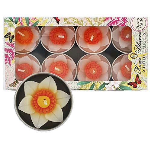 Hana Blossom Fairtrade-Duft-Teelichter in Narzissen-Design, handgefertigt, in Geschenkverpackung