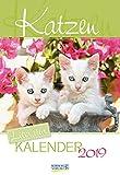 Katzen (2-Wo.) 236719 2019: Literarischer 2-Wochenkalender * 2 Wochen 1 Seite * literarische Zitate und Bilder * 16,5 x 24 cm