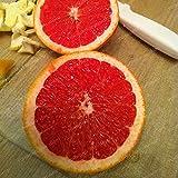 Generic Fresh 30 pcs Semillas de fruta de limón rojo para plantar rojo