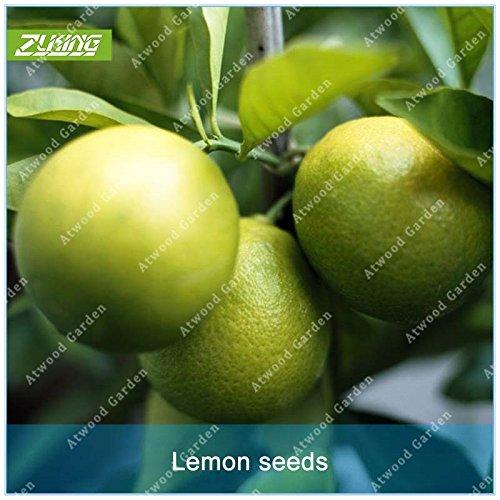 ZLKING Mini vert chinois 50pcs Citron Fruit Bonsai Graines Citron vert riche en matière organique en vitamines Trempé dans l'eau Plantes Beverage Jardin