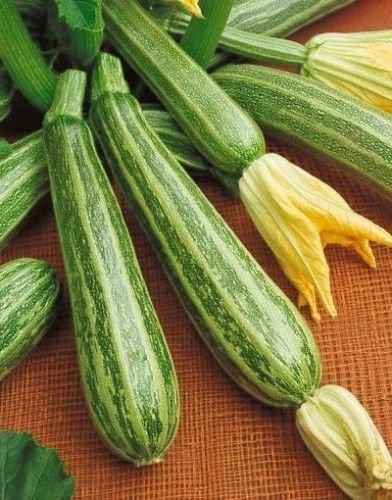 Zucchini Italian Striped - Kürbis - 20 Samen