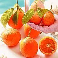 国華園 鉢植え向き果樹苗 レモン 赤ミニレモン 1株