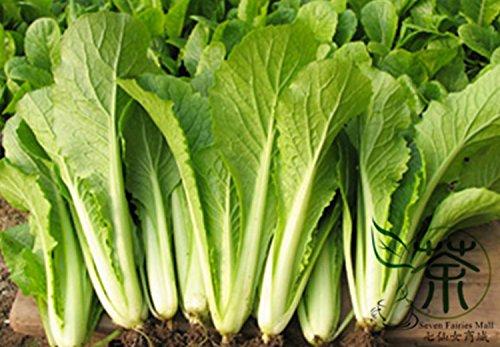 Facile à cultiver le col de Chine Seeds 5000 pcs, plante annuelle de la feuille de graines de légumes, mini jardin Bok Choy graines de col blanc