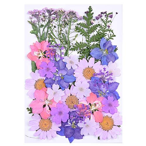 Flores Secas Prensadas, MXJFYY 34 piezas de Flores Prensadas Naturales Hojas Coloridas Flores Secas para Manualidades de Bricolaje Velas de Resina Arte Decoraciones Florales (A)
