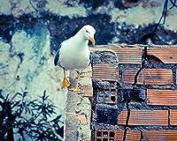 数字でペイントキャンバスカラー原稿鳥の壁の散歩数字でDiyデジタル絵画現代の壁アート油絵ホリデーギフト家の装飾ビッグサイズ カスタマイズ可能 40x50cm DIYフレーム