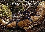 Vogelspinnen - Tarantulas (Tischkalender 2021 DIN A5 quer)