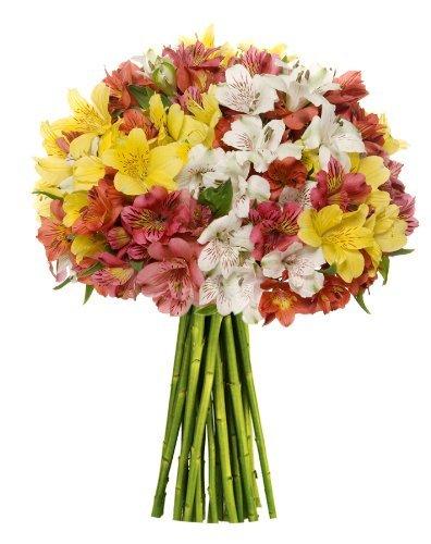 Premium Alstromeria Peruvian Lilies by Eflowerwholesale (100 blooms)