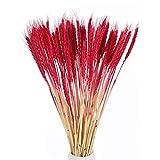NAHUAA100PCS Flores Secas Ramo de Flores Ramo de Trigo para Decoración de jarrón Boda hogar Oficina Cocina Fiestas o Regalo Espigas de Trigo Rojo