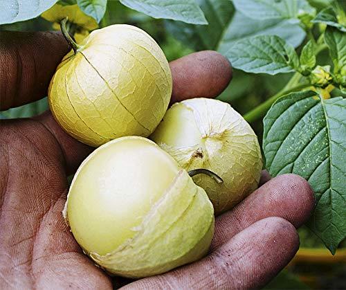 Bobby-Seeds Samen Tomatillo Amarylla Portion