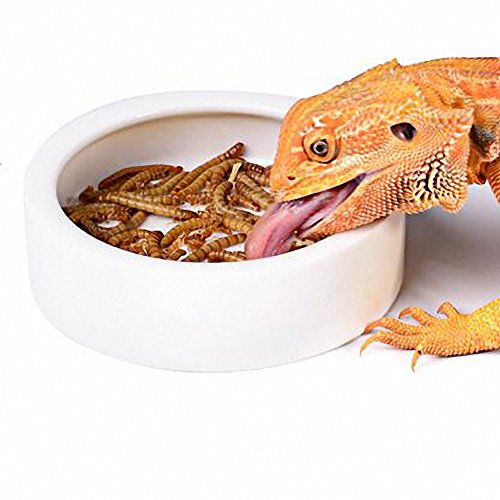 OMEM Plato para gusanos mini para reptiles de cerámica hecho (M)