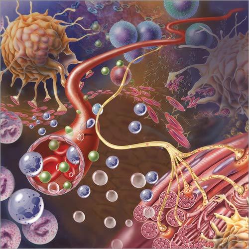 Posterlounge Hartschaumbild 40 x 40 cm: Nervenende sendet Schmerzimpulse von einem verletzten Muskel von Stocktrek Images