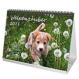 Welpenzauber DIN A5 Tischkalender für 2021 Hunde Welpen - Seelenzauber