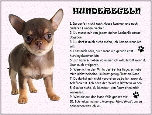 Merchandise for Fans Blechschild/Warnschild/Türschild - Aluminium - 20x30cm - - Hunderegeln - Motiv: Chihuahua - 01