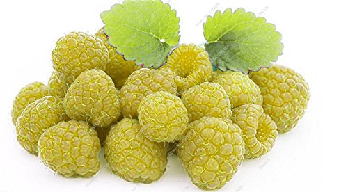Coloré Blackberry Arbre Raspberry Graine Fruit Graine Mulberry Stratified Black Berry Bonsai non-OGM plantes bio 500 pcs/sac 10