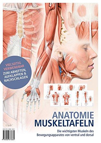 Anatomie-Muskeltafeln: Die wichtigsten Muskeln des Bewegungsapparates von ventral und dorsal