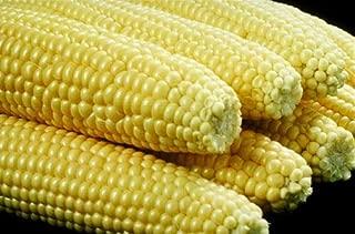 Sweet Corn Iochief Yellow 100 Seeds #SF23