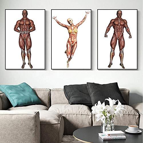 None brand Muskelkarte menschlicher Körper Ölgemälde hängendes Bild Poster Leinwanddruck Gemälde Wandkunst Wohnzimmer Wohnkultur No Frame-A_50X70cmX3