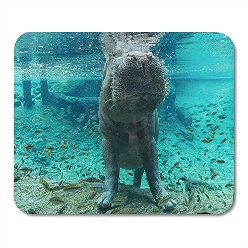 Mausepad Blaues Aquarium-Nilpferd In Grün Busch Garten-Wild Lebenden Tieren Tampas Florida Mausunterlage 25X30Cm