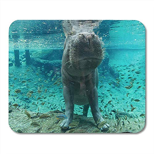 Mouse Pads Blue Aquarium Hippopotamus in Tampa Florida Green Busch Garden Wildlife Mouse pad 25 X 30 CM