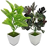 YOLETO 2 Pack Artificial Plants in Pots for Home Decor Indoor Aesthetic, Small Décor Faux Fake Plant for Desk and Shelf in Bathroom / Bedroom / Living Room/ Farmhouse Decorations