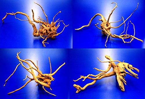 WFW wasserflora Rote Moorwurzel/Moorkienholz, Gr. S Traumwurzel 20-30cm