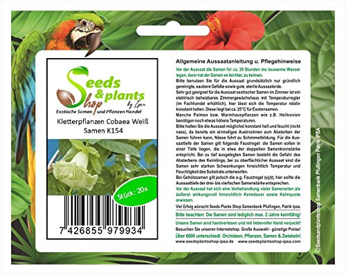 Stk - 20x Kletterpflanzen Cobaea Weiß Samen Pflanze Garten Saatgut K154 - Seeds Plants Shop Samenbank Pfullingen Patrik Ipsa