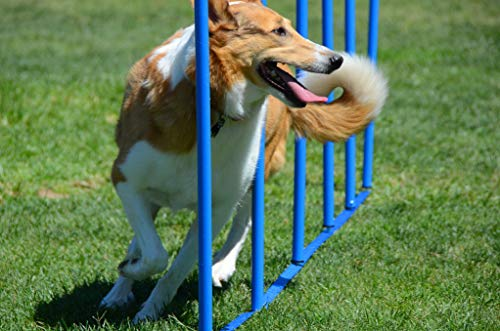 Dog Weave Poles Training Weave Poles Stake Type Dog Agility Super Strong Great for All Dogs Large and Small. Dog Agility Equipment Dog Training