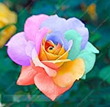 100 piezas de 20 clases de semillas Semillas Bonsai Rose Flower Negro Rose Así Encanto rara planta perenne Flores Para el hogar roja del jardín