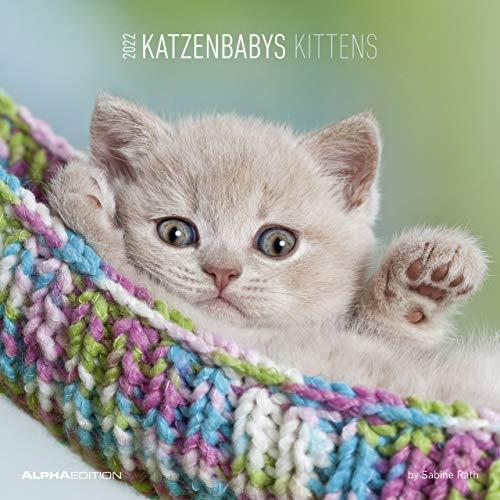 Katzenbabys 2022 - Broschürenkalender 30x30 cm (30x60 geöffnet) - Kalender mit Platz für Notizen - Wandkalender - Wandplaner - Katzenkalender: by Sabine Rath