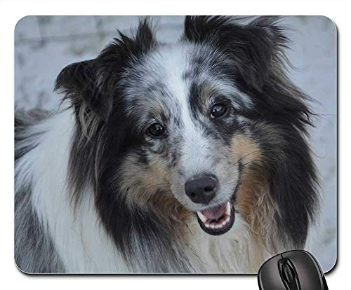 Gaming-Mauspads, Mauspad, Shetland Sheepdog Dog Junge weibliche Natur