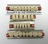 Best Fake Teeth - Dental Acrylic Resin Teeth Denture For Halloween Horror Review